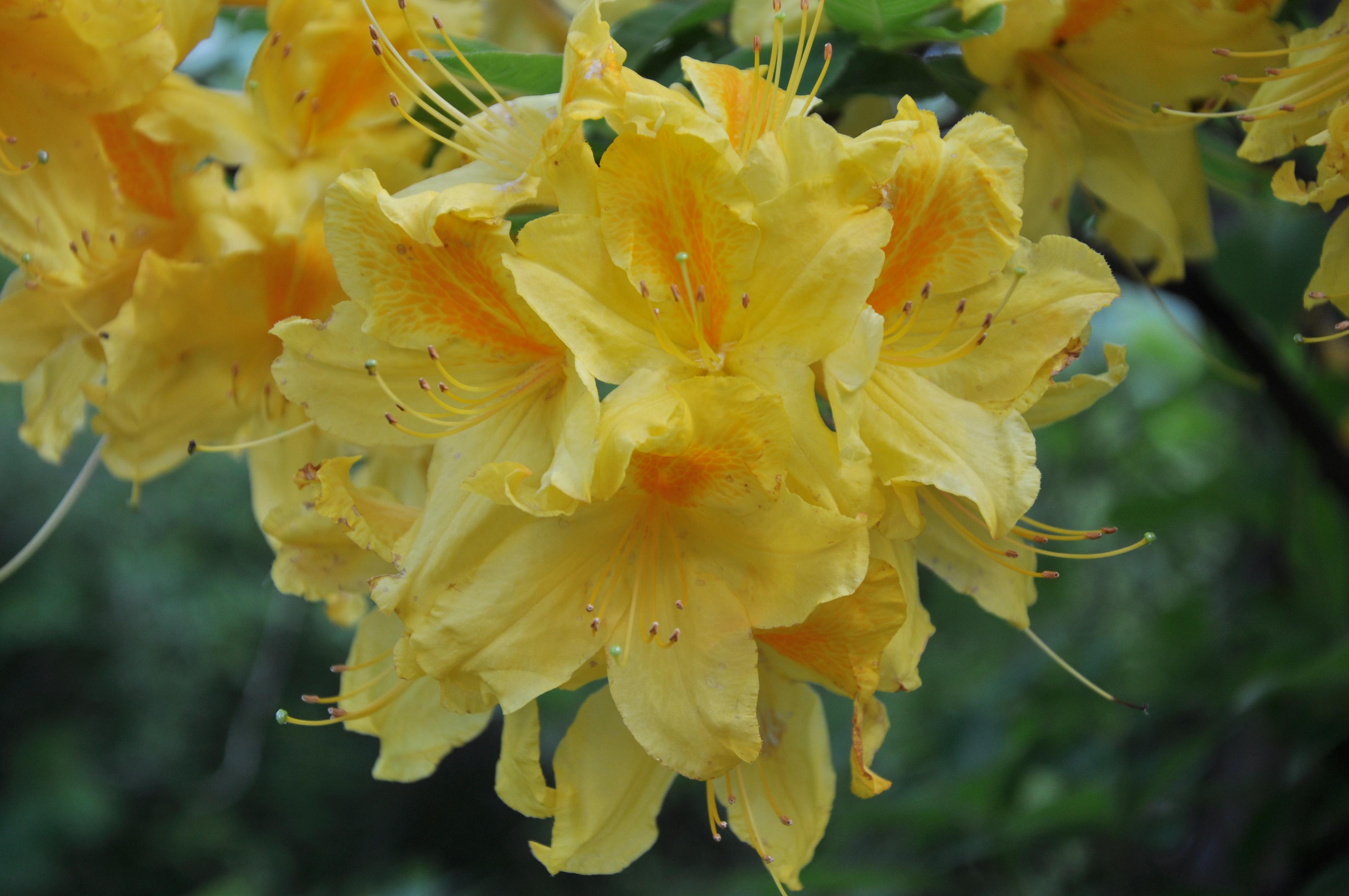 Primavera fiori del mio giardino maria dallabona for Fiori di primavera