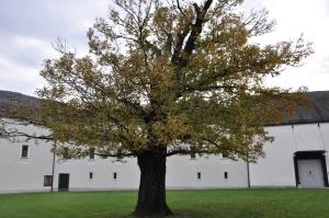 Albero solitario al Castello