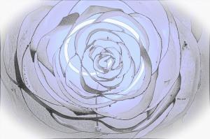 Rosa disegnata