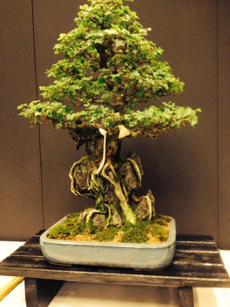 Steve Lee dei Gotthard - mostra di quadri e bonsai in suo onore (4/6)